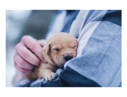 Veterinary Job Posting Sites